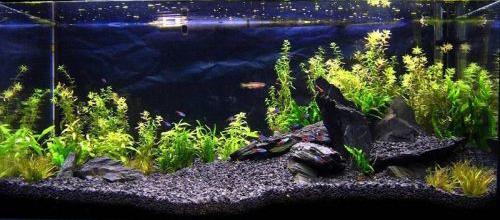 Aquarium Black Grey Natural Stone Rock For Fish Tank